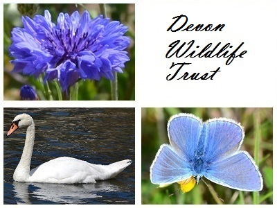 Devon Wildlife Trust at Little Bradley Ponds