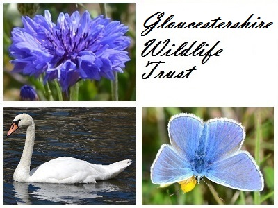 Gloucestershire Wildlife Trust at Arle Grove