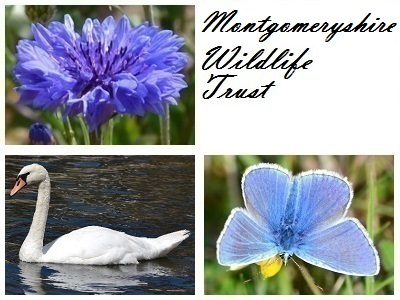 Montgomeryshire Wildlife Trust at Bugeilyn