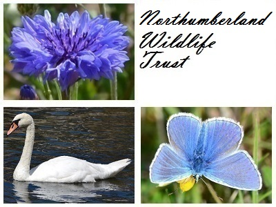 Northumberland Wildlife Trust at Arnold Memorial