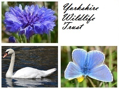 Yorkshire Wildlife Trust at Ashberry Nature Reserve